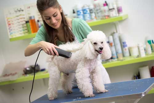 Our Top Dog Grooming Tips